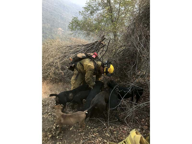Thank you Calaveras Consolidated Firefighters