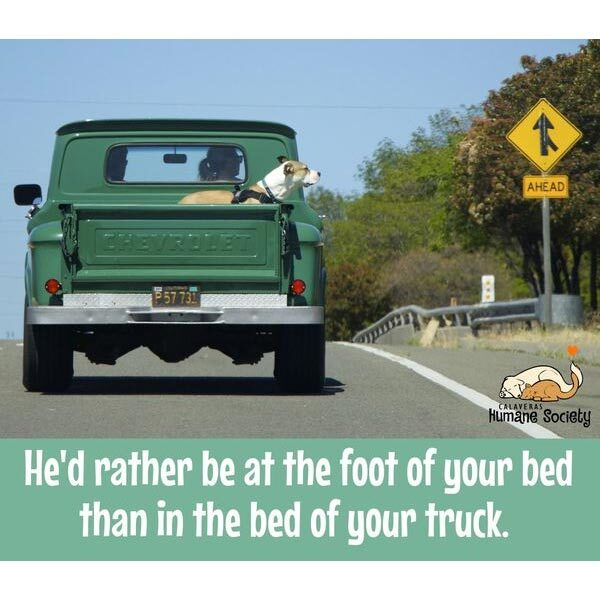 Safety first! He'd rather be at the foot of your bed