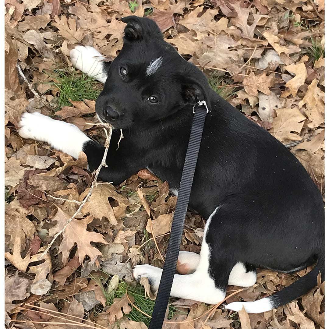 Levi dog home April 2021