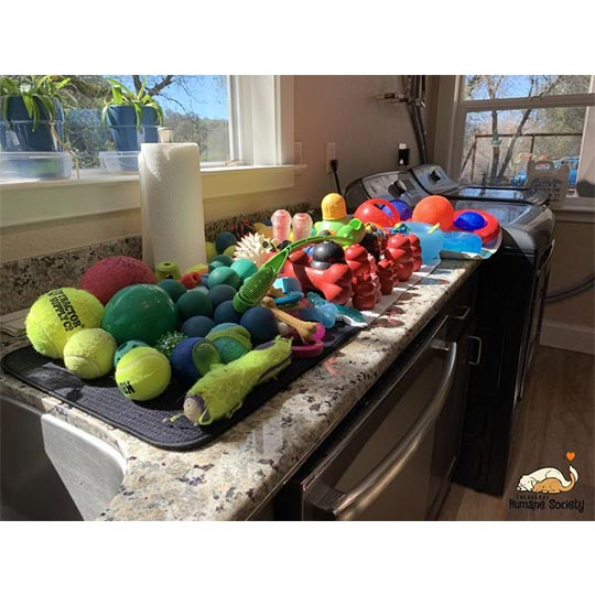 Behind the scenes - washing dog toys - March 2021
