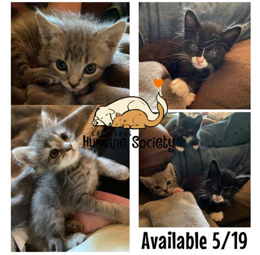 Litter of five kittens ready for adoption