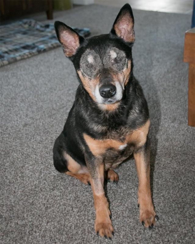Chester dog CCAS