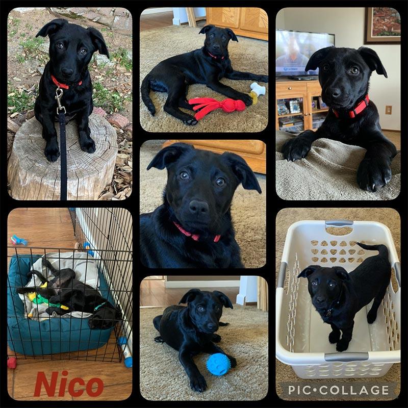 Nico dog at home April 2021