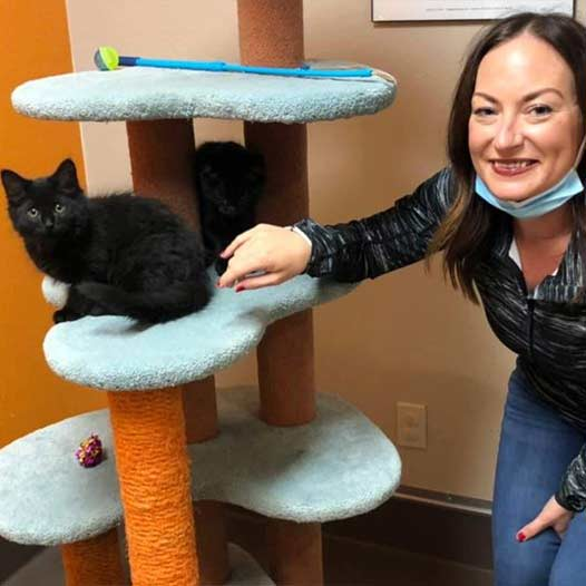 Apollo and NYC cats adopted January 24 2021