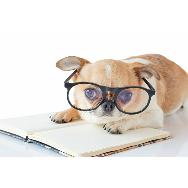 Current news - dog wearing glasses reading book