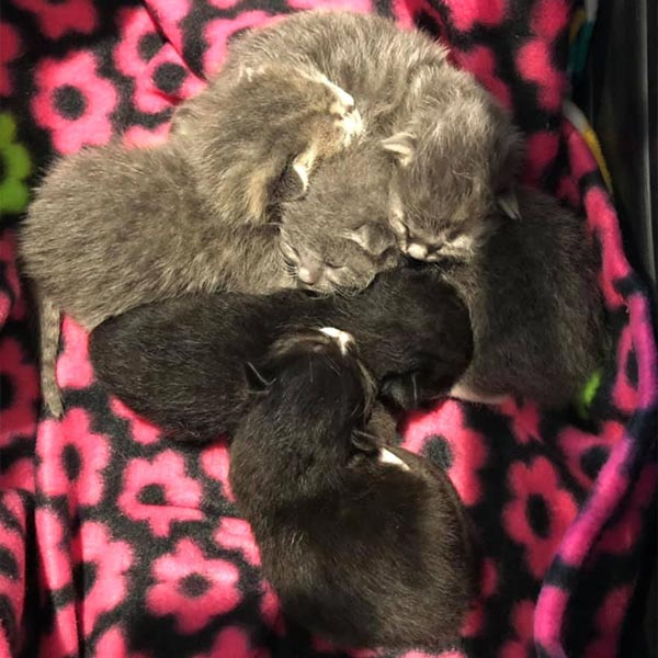Five kittens in foster home, March 2021
