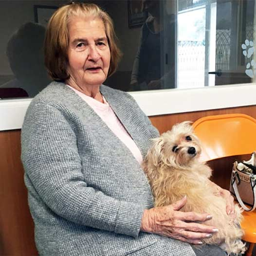 Hazelnut dog adopted January 8 2020 through our Seniors for Seniors Program