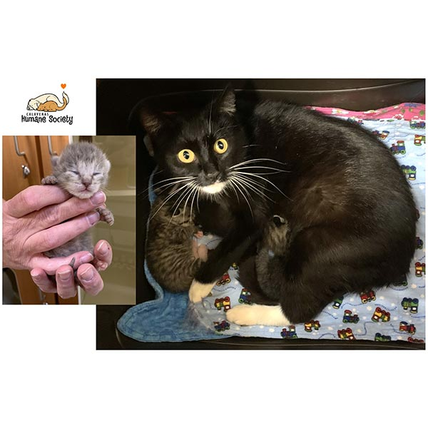 Mama Cat and Kittens safe in foster home, April 2021