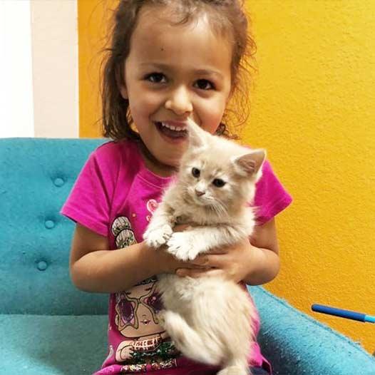 Nala cat adopted May 26 2021