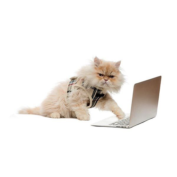 News Archive 2020 - cat wearing glasses typing at computer