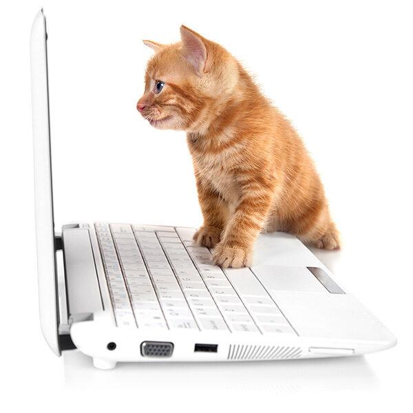 News kitten