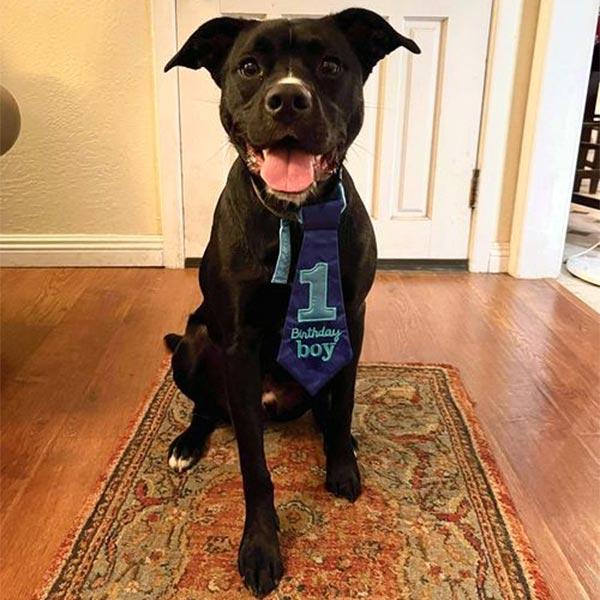 Otis dog at home January 2021