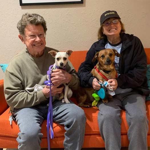 Pepper dog adopted January 2 2021