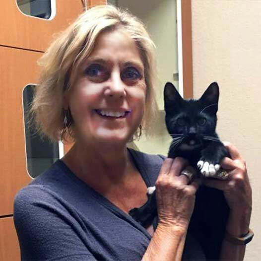 Romeo cat adopted July 17 2019