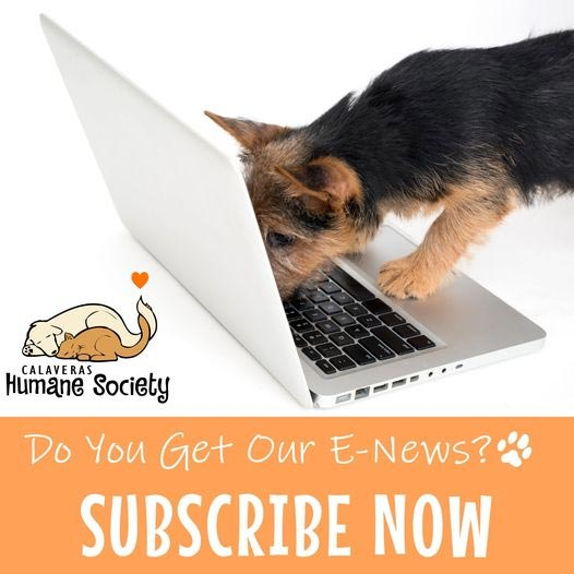 Subscribe to the CHS e-newsletter!