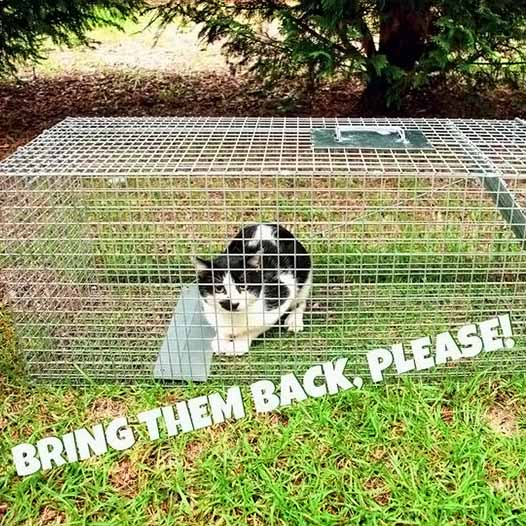 Cat caught in humane trap - Bring back borrowed traps, please