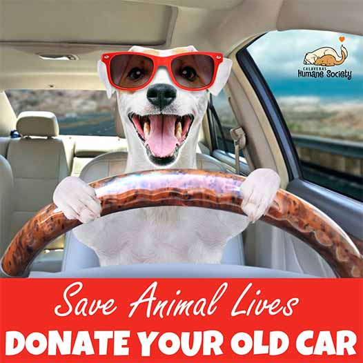 Dog in red sunglasses driving a car