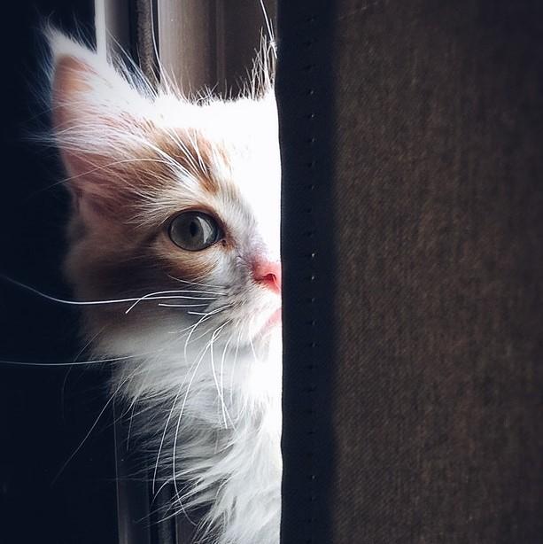Kittens in need