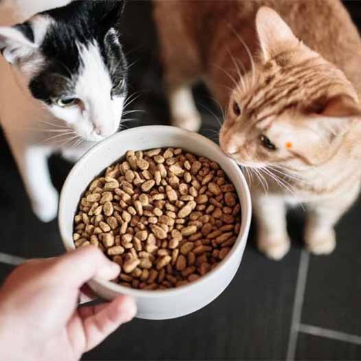 Two cats being fed dry food in a white bowl