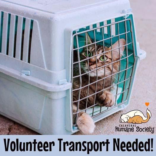 Volunteer Transport Needed