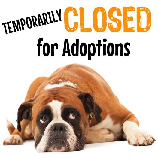 Temporary closed for adoptions