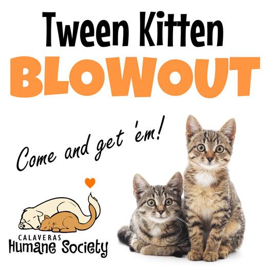 Tween Kitty Blowout - adoption sale