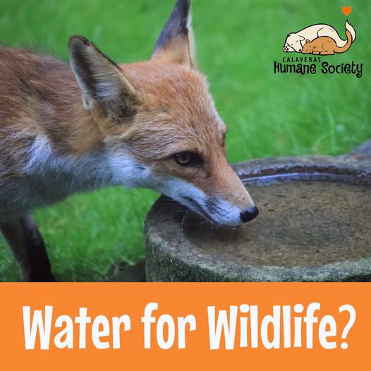 Water For Wildlife? Don't do it.